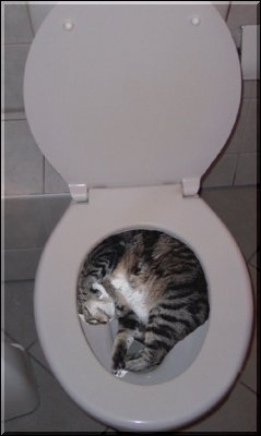 TOILET SLEEP